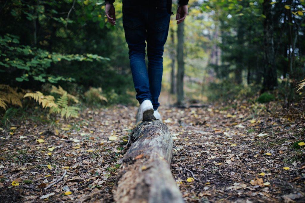 wood, log, walking